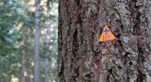 A Baden Powel trail marker on a tree