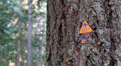 A Baden Powel trail marker on a tree
