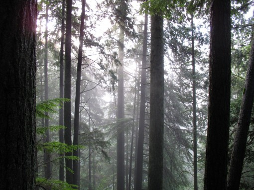 Hiking in Capilano Canyon on a foggy, rainy day in December