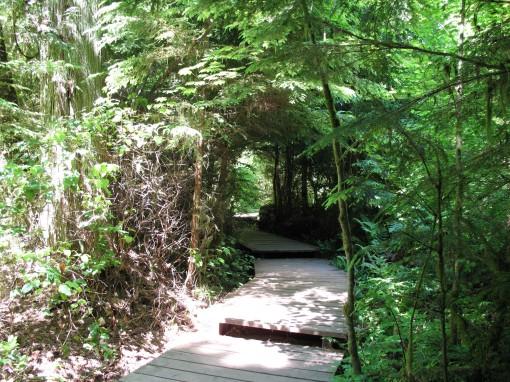 Pathway in Pacific Spirit Regional Park in Vancouver