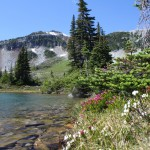 Wild flowers grow along the edge of Symphony Lake in Whistler's Alpine