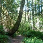 The 7 Sisters Trail near Cultus Lake
