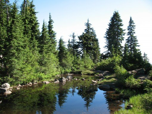 A tiny lake along the Hollyburn Mountain trail