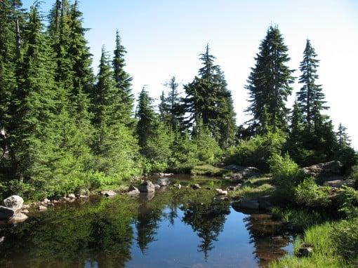 A tiny lake along the Hollyburn Mountain trail