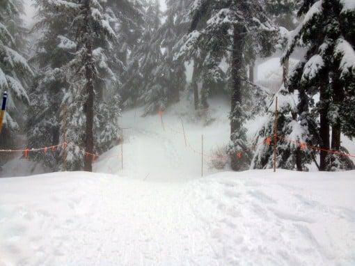 A bit of fog along the Snowshoe Grind trail