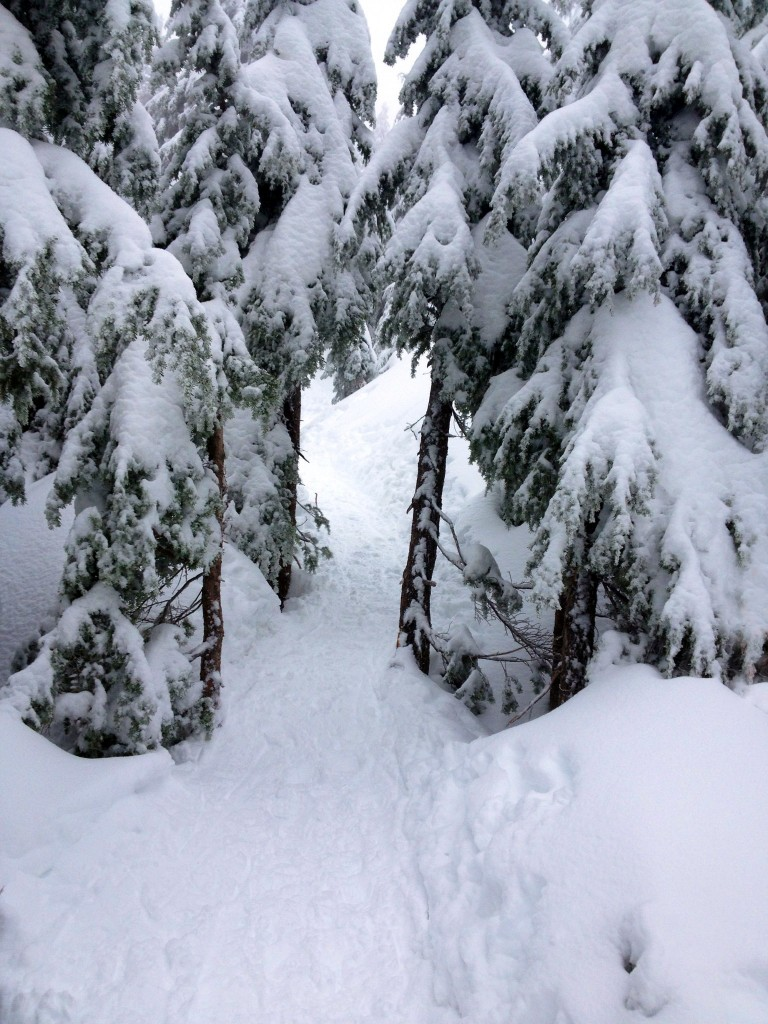 The Snowshoe Grind passes through the trees