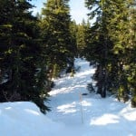 The snowshoe route to Hollyburn Mountain passes through a beautiful forest