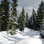 Untouched snow at the side of the snowshoe trail to Hollyburn Mountain