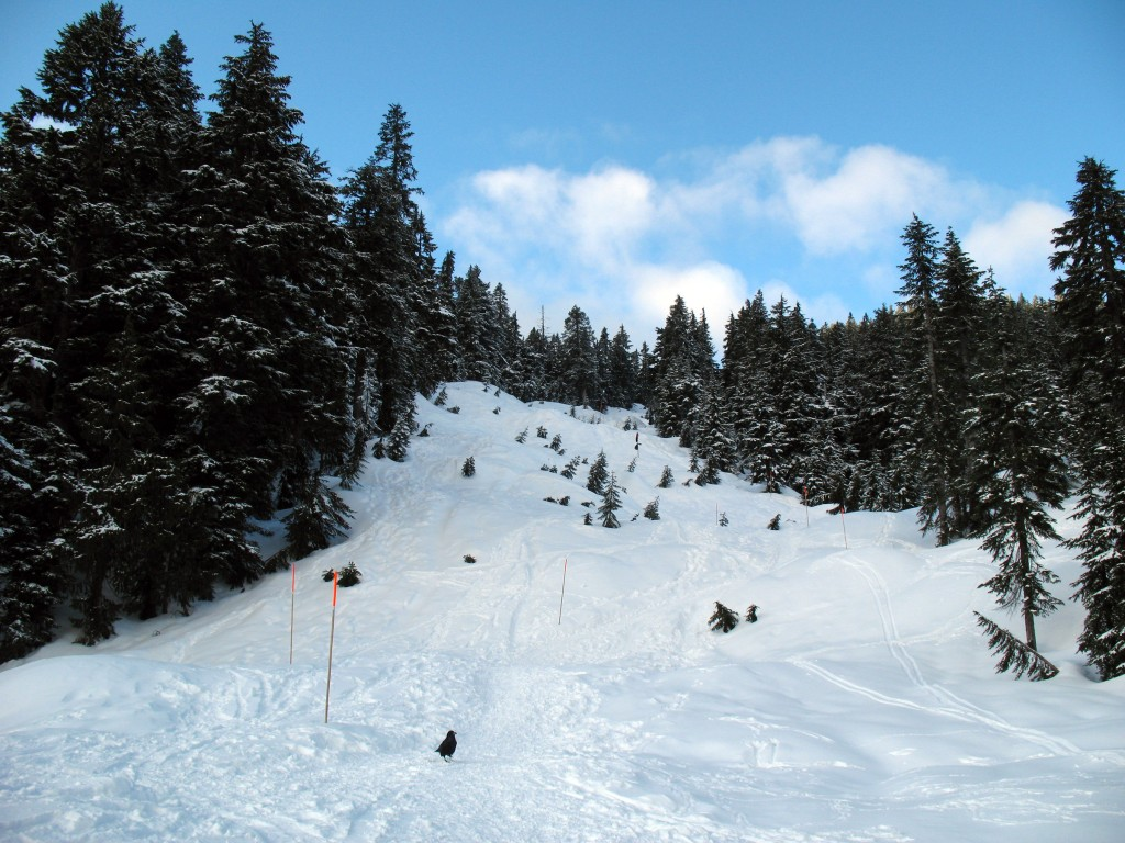 A steep section along the snowshoe trail to Hollyburn Mountain