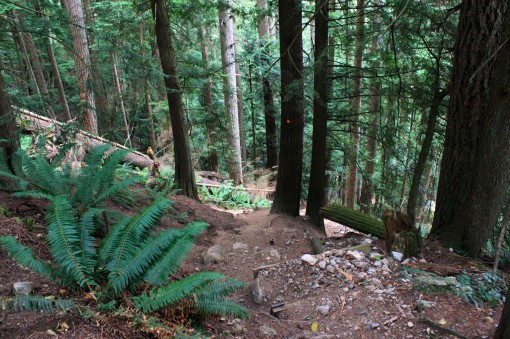 Baden Powell Trail between Skyline and Grouse Mountain
