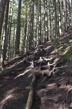The BCMC Trail to the top of Grouse Mountain