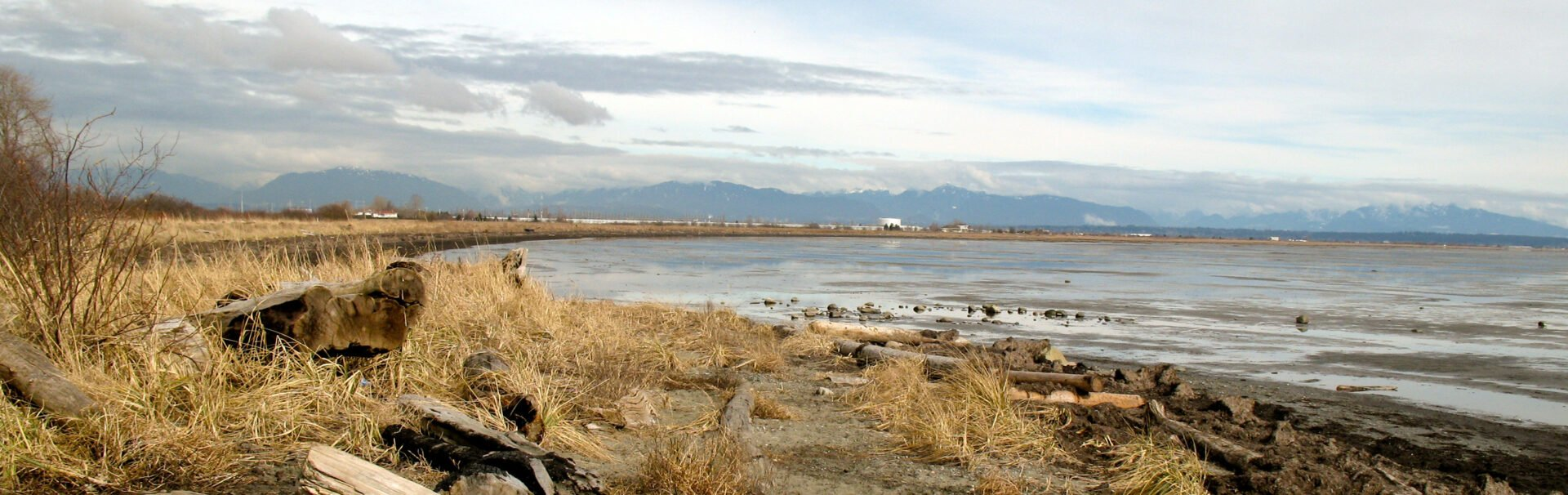 Bird watching at Boundary Bay Regional Park
