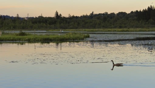 Burnaby Lake
