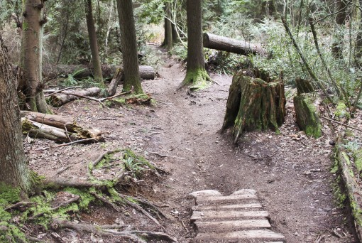 Burnaby Mountain Trails near North Road