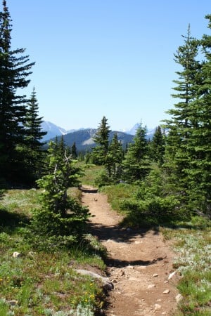 The Heather Trail in Manning Park