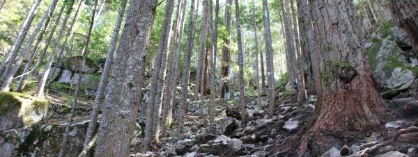 The steep Sea To Summit Trail