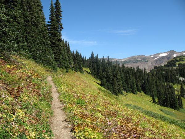 Between Taylor Meadows and the Panorama Ridge junction