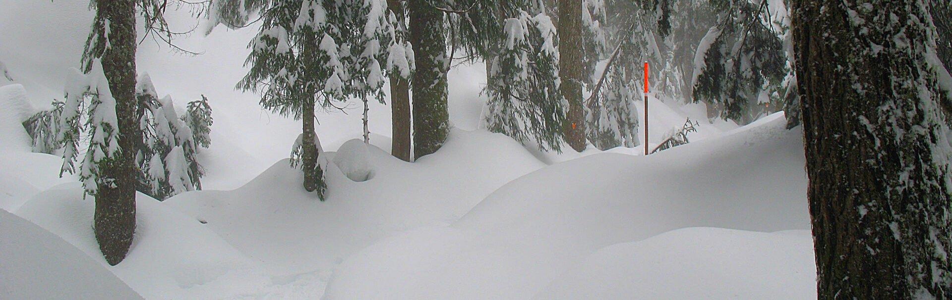 Vancouver Snowshoe Trails