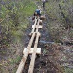 BCMC Crew lays the cedar rounds and stringers for the new Demon Creek Swamp Boardwalk (2017).