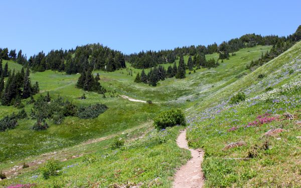 The trail to the top of Mount Cheam