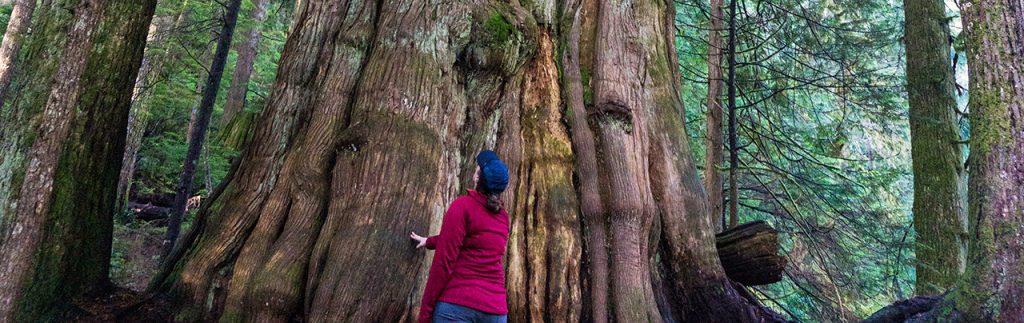 Vancouver's Big Trees