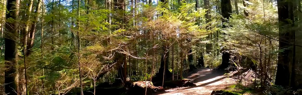 4K Hike of Capilano River Regional Park