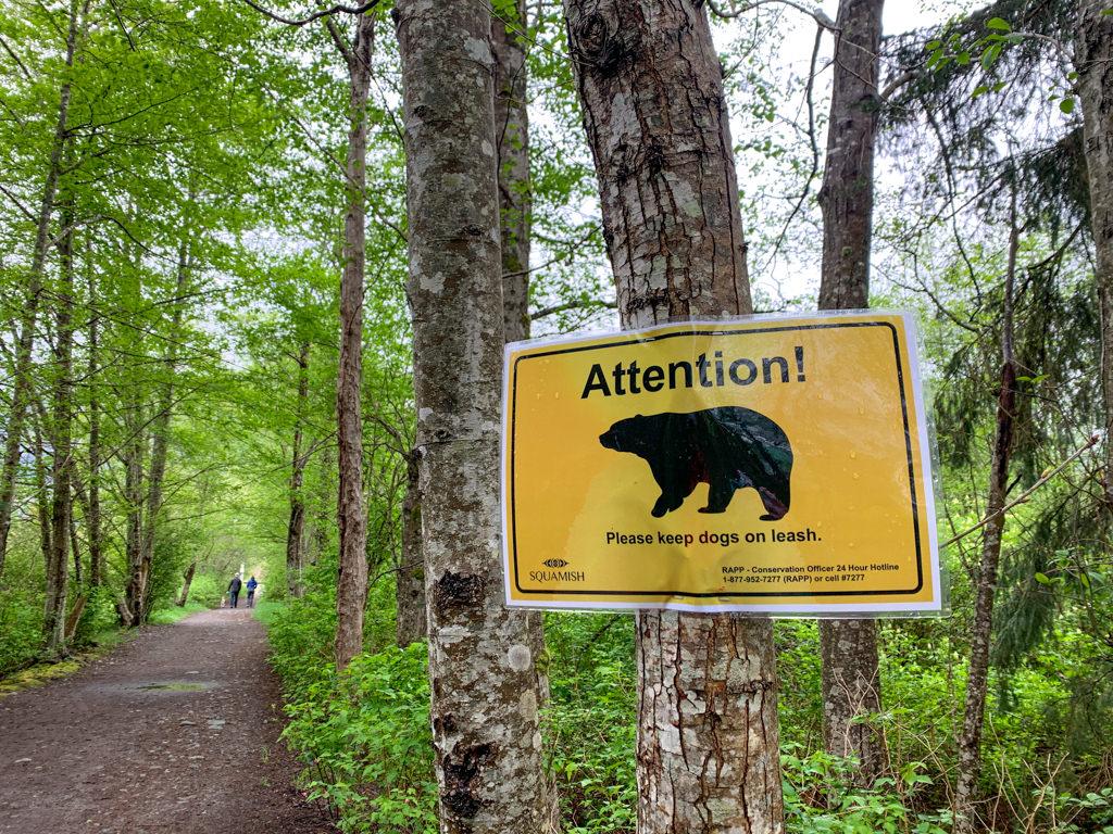 Bear in Area