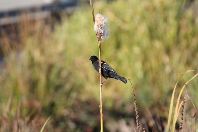 Cottonwood Trail
