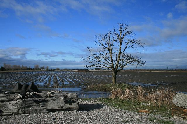 Delta Dyke Trail/boundary Bay