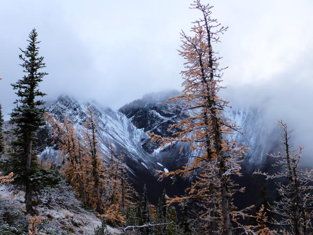 Mt Frosty And Larch Grove