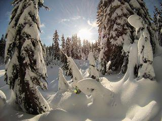 Mount Seymour Snowshoe Trail