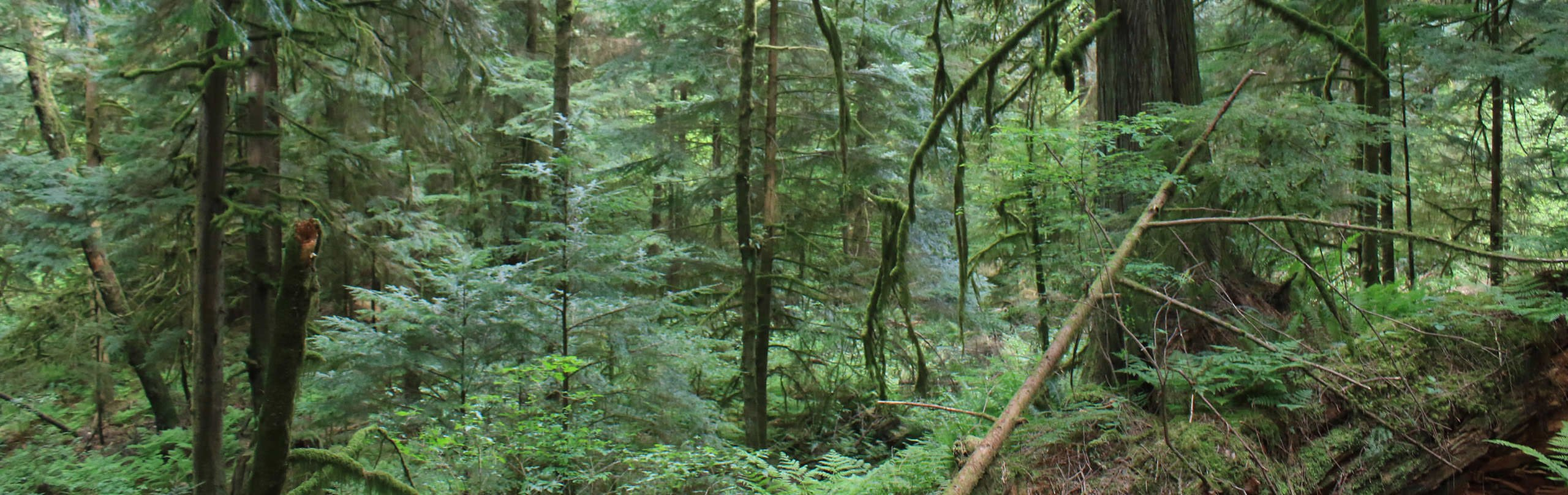 The forest on Bowen Island, BC