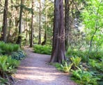 The beginning of the trail through the forest to Admiralty Point near Belcarra