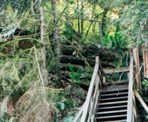 Steep wooden stairs along a section of the Baden Powell Trail near the Seymour River