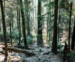 A rocky section of trail along the Baden Powell Trail in North Vancouver, BC