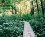 The Baden Powell Trail follows a series of boardwalks near Lynn Creek in North Vancouver