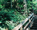 Stairs at the start of the Baden Powell Trail leaving the Lynn Canyon area