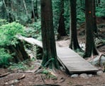 Boardwalks along Baden Powell Trail above the Braemar Dempsey neighbourhood in North Vancouver