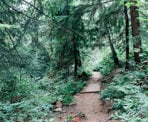The Baden Powell Trail above the Delbrook neighbourhood in North Vancouver