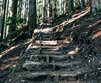 Wooden steps of the BCMC Trail in North Vancouver