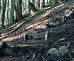 The well used wooden steps of the BCMC Trail in North Vancouver