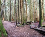 The forested trail in Bert Flinn Park in Port Moody