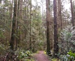 The forested hiking trail in Bert Flinn Park in Port Moody