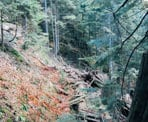 The rugged trail to Kennedy Falls has many old wooden ties that were used in logging operations