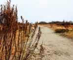 The Raptor Trail at Boundary Bay Regional Park south of Vancouver