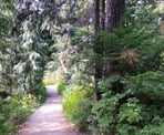 The Yew Lake Trail near Cypress
