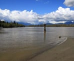 The view looking down the Fraser River from Tavistock Point on Brae Island in Fort Langley