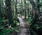 The lush forest trail around Brohm Lake north of Squamish, BC