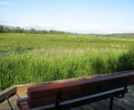 A bench with a view on the raised wooden boardwalks on the south side of Burnaby Lake