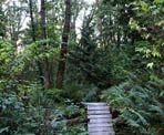 A wooden ramp on the Dead Moped Trail on Burnaby Mountain